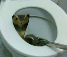 ใช้ได้ผล!! ทำแบบนี้ในห้องน้ำ สกัด งูโผล่ จากคอห่าน- ชักโครก!