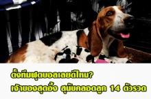 อะไรจะเยอะขนาดนั้น!! เจ้าของสุดอึ้ง สุนัขคลอดลูก 14 ตัวรวด