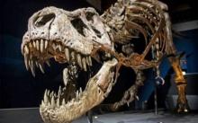 นักวิจัยชี้ที.เร็กซ์ไม่ได้เป็นไดโนเสาร์ที่มีขน