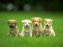 คนรักหมาระวัง! โรคหมาแท้ง ระบาดติดสู่คนได้