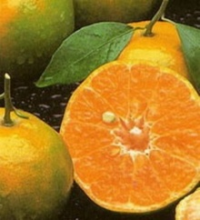 ส้มเขียวหวานอาจลดความเสี่ยงการเกิดมะเร็งตับ