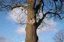 ~~~ การปลูกต้นไม้เพื่อฮวงจุ้ยที่ดี ทำให้เจ้าของบ้านเจริญรุ่งเรือง ~~~