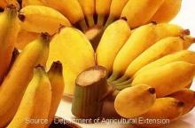 """ชูเรื่อง""""กล้วย""""สร้างกระแสลดน้ำหนัก ทูตพาณิชย์ไทยในญี่ปุ่นทำดี แต่วันนี้กล้วยขาดตลาด"""