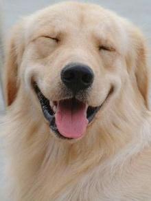 การหัวเราะดังที่สุดของหมามะกัน