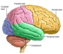 คนจะฉลาดหรือโง่ขึ้นอยู่กับสิ่งสำคัญขนาดของมันสมอง