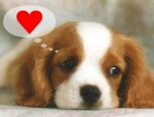 ทำไมถึงเรียกว่า Puppy Love (รักแบบลูกหมา)