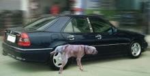 ทำไมสุนัข มักนิยมฉี่ใส่ยางรถยนต์