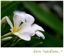 นิทานดอกลั่นทม