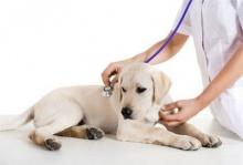 10 โรคฮิตทำน้องหมาต้องผ่าตัด