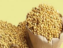 ยีนความหอมในถั่วเหลือง
