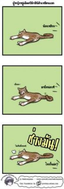 ผู้หญิงหมู่เลือด B มักนิสัยเหมือนแมว