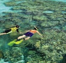 ดำน้ำตื้นดูปะการัง 'หมู่เกาะสุรินทร์'
