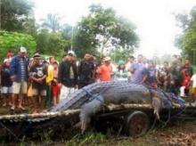 กินเนสรับรองจระเข้ยักษ์ฟิลิปปินส์ขนาดใหญ่ที่สุดในโลก