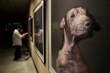 นิทรรศการภาพสุนัขจรจัดชะตาขาด