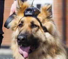 อังกฤษเจ๋ง ติดกล้องไฮเทคบนหัวสุนัขตำรวจ ช่วยโปลิศรู้ตัวคนร้ายหลบซ่อน