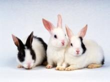 เงาสะท้อนภัยกระต่าย พิษเชื้อร้าย! ใหม่หรือเก่าก็ต้องกลัว