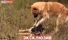 """หมา""""เฝ้าร่าง-ปลุกเพื่อนให้ฟื้น หลังถูกรถชนตาย ผู้คนหลั่งน้ำตาเศร้าแทน"""