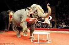 มอมเหล้าช้าง:เอิ๊กอ๊ากอินเตอร์