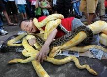 รับปีงู นอนกองอยู่กลางวงงูเหลือม