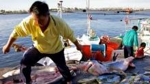 เผยฉลามถูกฆ่าเพื่อเอาครีบปีละกว่า 100 ล้านตัว