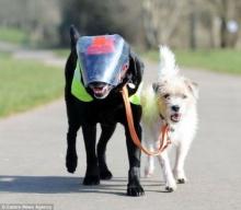 ความผูกพันเล็กๆของสองหมา