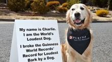 น้องหมาแดนจิงโจ้ คว้าแชมป์ เห่าดังที่สุดในโลก