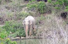 เปิดตำราหา ช้างเผือก ใช่ - ไม่ใช่