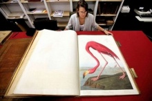 Birds of America หนังสือนกแพงที่สุดในโลก