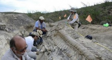พบฟอซซิลส่วนหางไดโนเสาร์ปากเป็ด