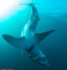มนุษย์โหดกว่า! ช็อก พบฉลามถูกฆ่าสุดเถื่อนใต้ท้องทะเลอุทยานสัตว์น้ำ