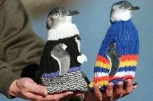 มูลนิธิช่วยเหลือเพนกวินออสเตรเลีย ไอเดียเริ่ดถักเสื้อให้เพนกวินใส่