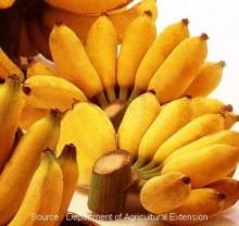 กล้วยน้ำว้า บำรุงผิว ดับกลิ่นปาก