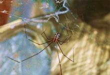 รู้จัก แมงมุมพิษ มหาภัย สารพัดสายพันธุ์-กัดถึงตาย!