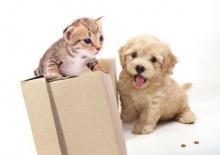 จริงหรือ…ที่แมวกลัวน้ำและไม่ถูกกับสุนัข??