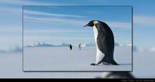 เมื่อ 37 ล้านปีก่อน เพนกวิน สูงกว่า มนุษย์!?