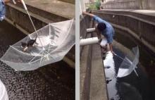 ประทับใจ! หนุ่มช่วยแมวตกน้ำด้วยร่ม