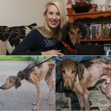 อึ้ง!! สุนัขผอมโซถูกชุบชีวิตใหม่ สภาพเปลี่ยนไปราวปาฏิหาริย์