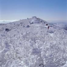 เทศกาลหิมะ ภูเขาแทแบ็ค ประเทศเกาหลี