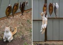 จริงอะ! มาดูภาพที่บอกว่า แมว คือ จอมนินจา