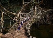 สะพานที่มีชีวิต สิ่งมหัศจรรย์ที่ธรรมชาติสร้างขึ้นในอินเดีย