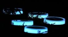 ประดับสวนให้สว่างอย่างๆ ล้ำด้วย Playbulb Garden