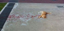 ไม่มีใครสนใจแมวตัวนี้ แต่ชายหนุ่มใจดีตัดสินใจเข้าไปช่วย
