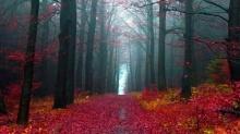 **ประตูสู่ป่าดำ Black Forest**