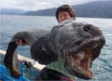 ฮือฮา..ชาวประมงญี่ปุ่นจับปลาไหลยักษ์ หน้าโหดได้อีก!!