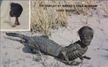 Jake The Aligator Manซากศพครึ่งมนุษย์ครึ่งจระเข้