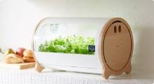 ไอเดียหลอดสวนผักในบ้าน ไม่ต้องใช้ดินแม้แต่นิดเดียว!!