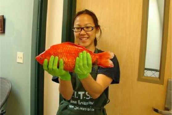 ปลาทองยักษ์ที่ถูกค้นพบล่าสุด บริเวณทะเลสาปทาโฮ ในประเทศสหรัฐอเมริกา