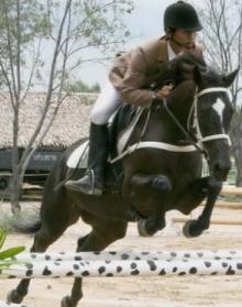 ขี่ม้าอย่างพระราชา
