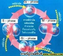 อาการข้างเคียงการใช้เคมีบำบัดรักษามะเร็ง
