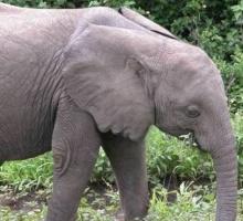 ภาพปริศนา : ช้าง